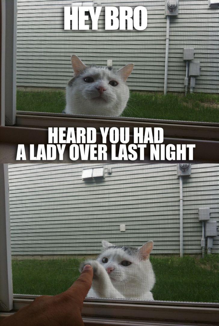 CatBump