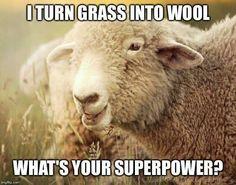 GrassIntoWool