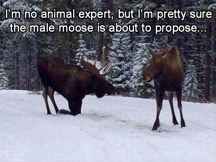 ProposeMoose