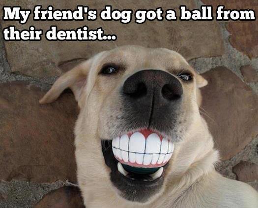 DogBallTeeth