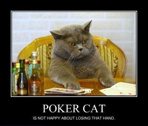 PokerCat