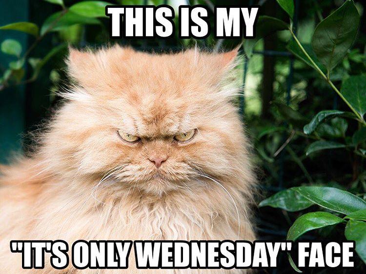 WednesdayFaceKitty
