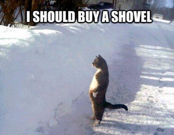 CatShovel
