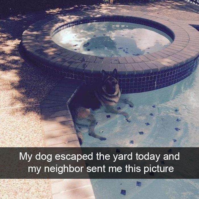 DogEscapePool