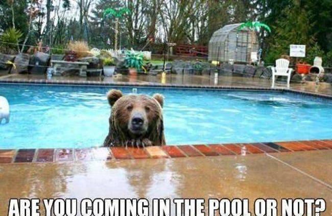 BearPool