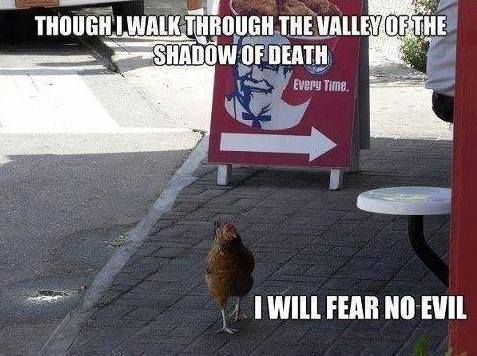 ChickenFear