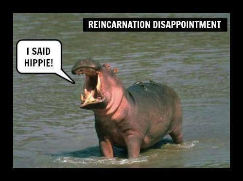 HippoLament