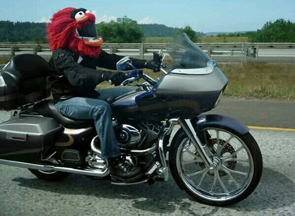 MuppetHelmet