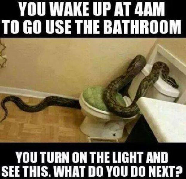 SnakeJohn