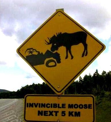 InvincibleMoose