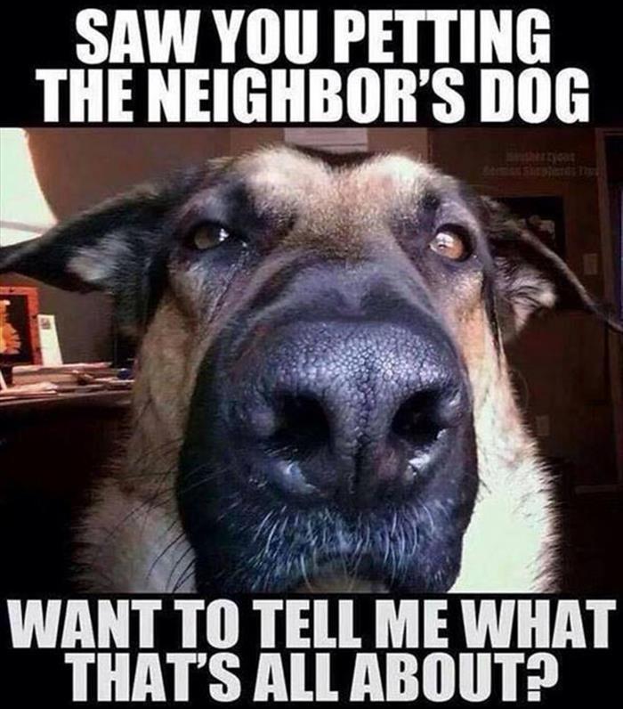 Neighbor'sDog